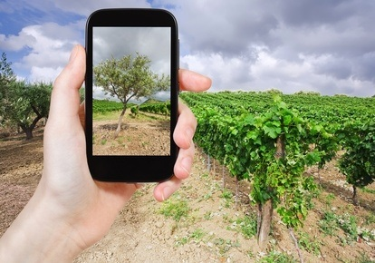 Las mejores apps para apasionados del vino